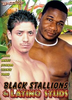 Black Stallions and Latino Studs